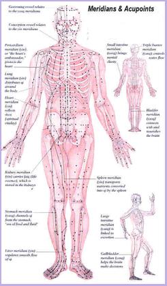 Kroppens nerver