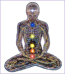 kroppen indre organer